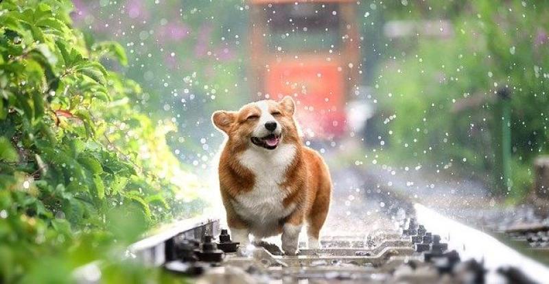NIJEMCI U ŠOKU Zakon im naređuje da šetaju pse dva puta dnevno!