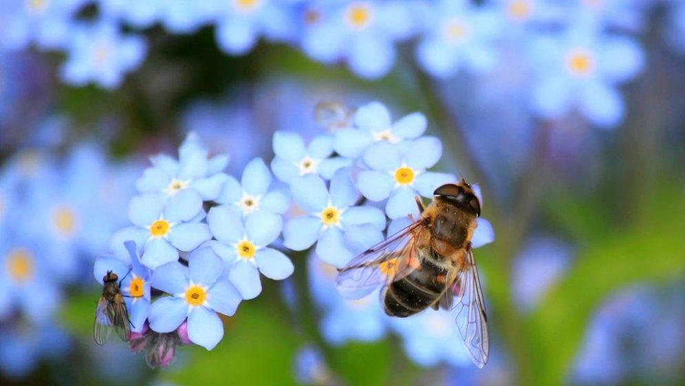 Australska studija pokazala da pčelinji otrov uništava stanice raka dojke