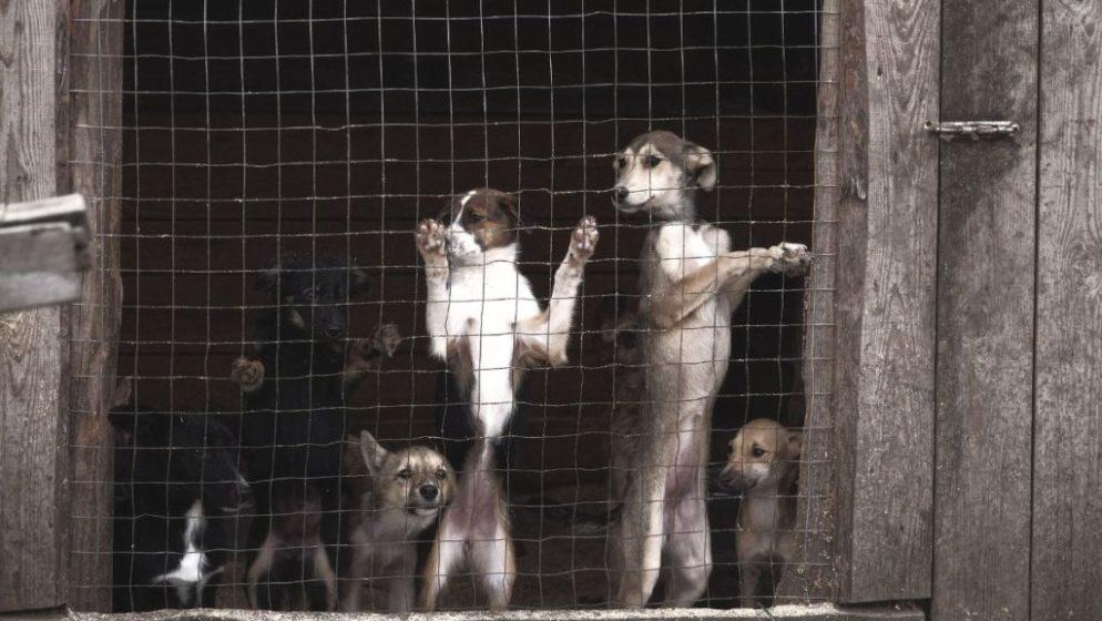 U Njemačkoj obavezne šetnje za pse, a u Hrvatskoj pate na lancu