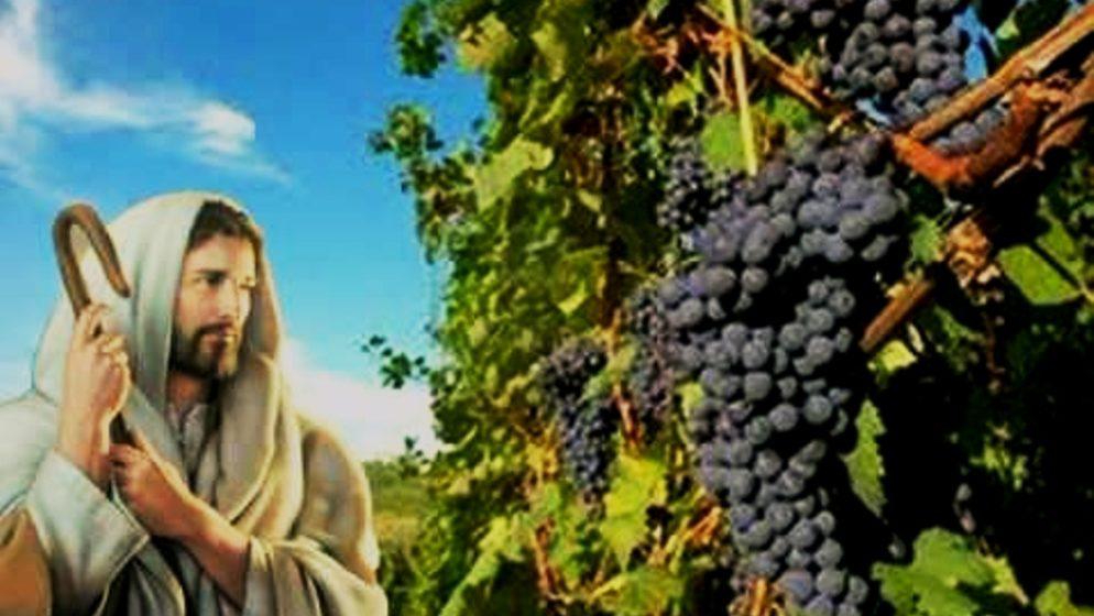 Vinograd će iznajmiti drugim vinogradarima