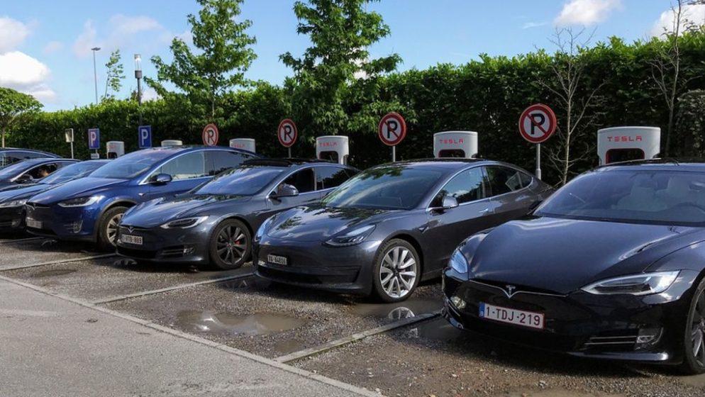 Tesla mora zbog zmija i guštera prekinuti gradnju tvornice električnih automobila u Njemačkoj!