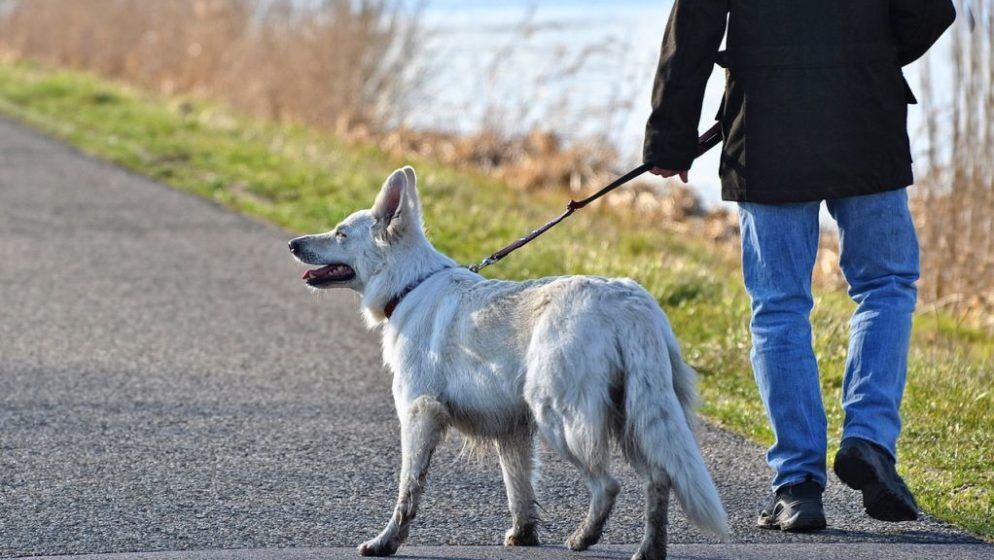 Nizozemci se javljaju za šetanje pasa da zaobiđu prvi policijski sat