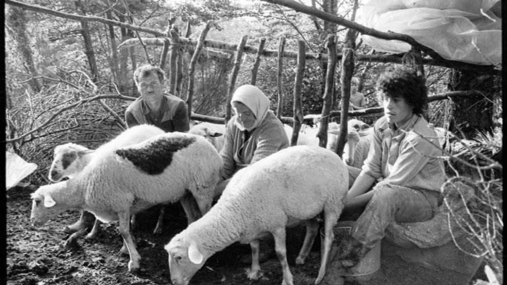 'Skromnom tehnikom snimio sam ove fotografije 1984. godine na Ćićariji, nešto neponovljivo kao i sam život'